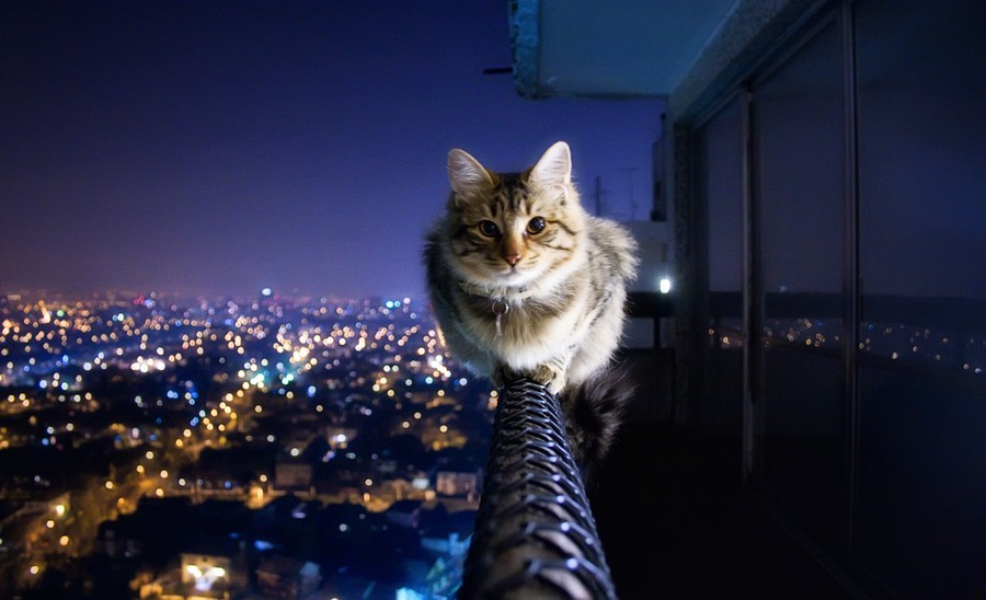 Brave-Cat-On-Penthouse-Ledge-Picture.jpg